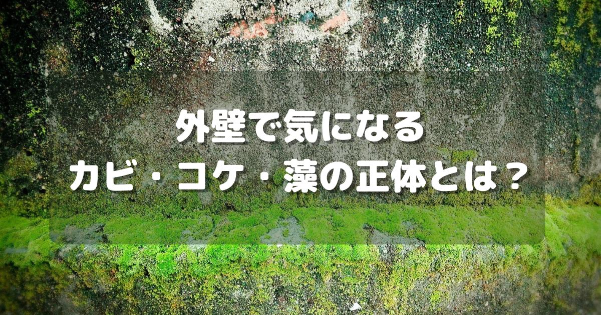 外壁で気になるカビ・コケ・藻の正体とは?